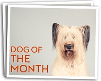 DDG Dog of the Month