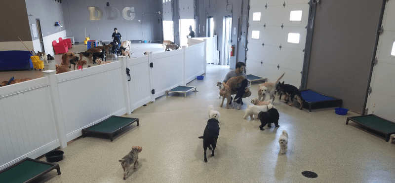 Dog Boarding Facility
