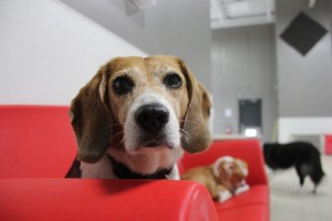 Dog daycare Apple Valley mn 2
