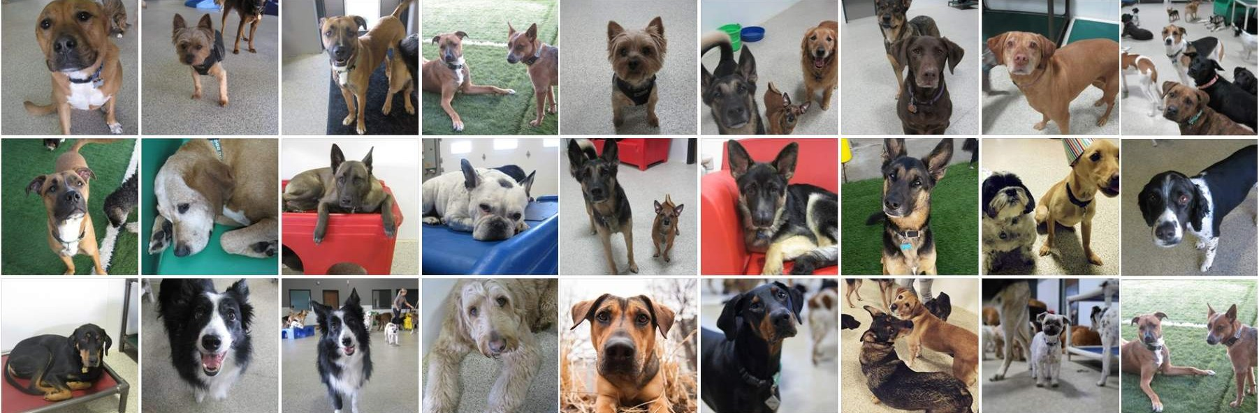 Doggie-Daycare