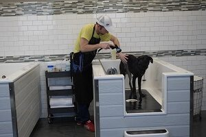 Self wash groomer apple valley mn