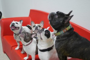 dog daycare apple valley mn