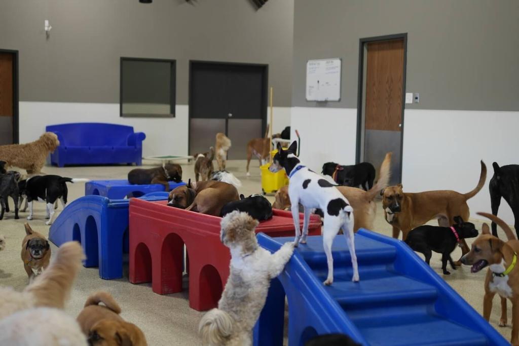 dog daycare apple valley mn dog day getaway