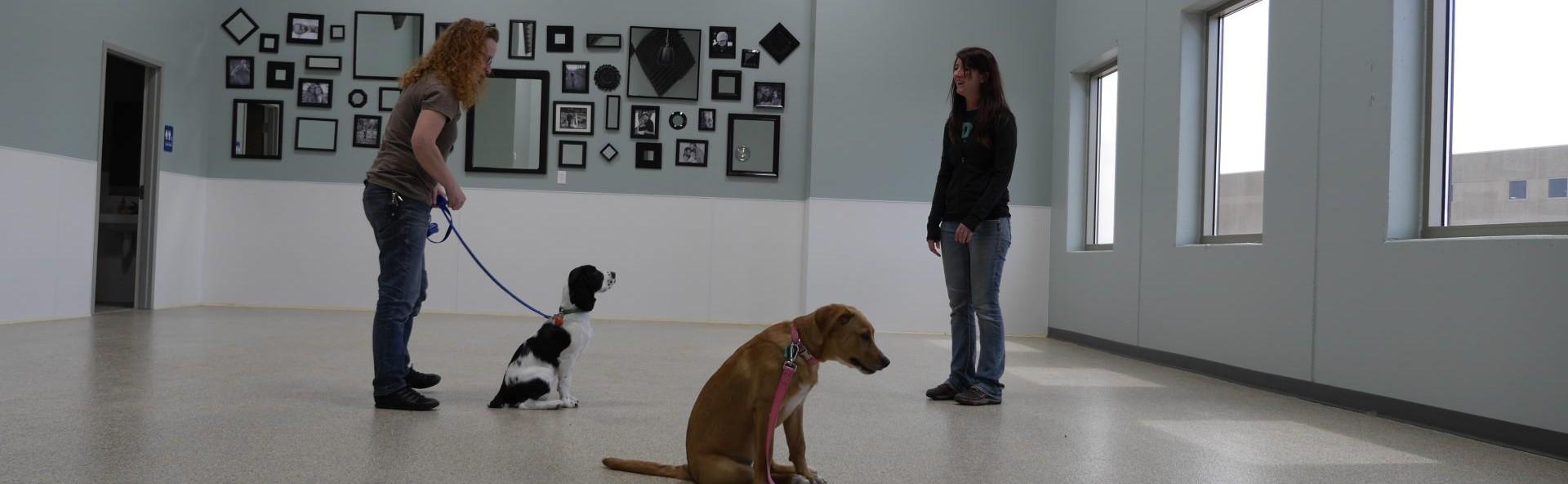 dog training apple valley mn