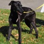 dog daycare, last hope, adopt, rescue, find a friend