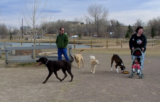 Top 10 Dog Park Tips