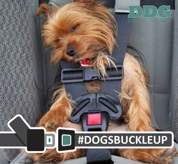 Dog Seat Belts and Safety Harnesses