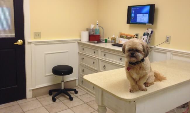 Dog Insurance
