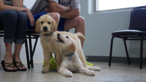 Puppy Playgroup @ Dog Day Getaway