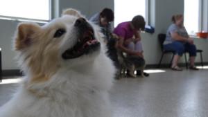 Small Dog Playgroup @ Dog Day Getaway