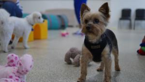 Tiny Tots Playgroup @ Dog Day Getaway