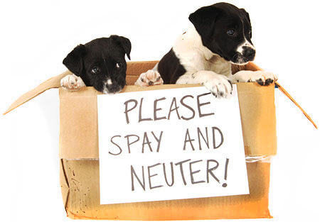 Why You Should Spay Or Neuter Your Dog