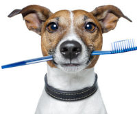 Cleaning Dogs Teeth