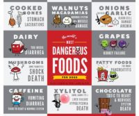 Table Scraps and Foods that dogs cant eat