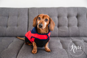 dog of the month february 2017 is beanie