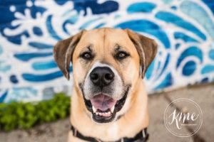 Desmond | Dog of the Month