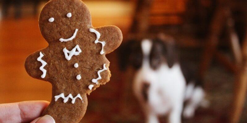 christmas dog treats rover will go bananas