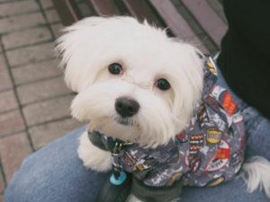 Dog Sweater DIY