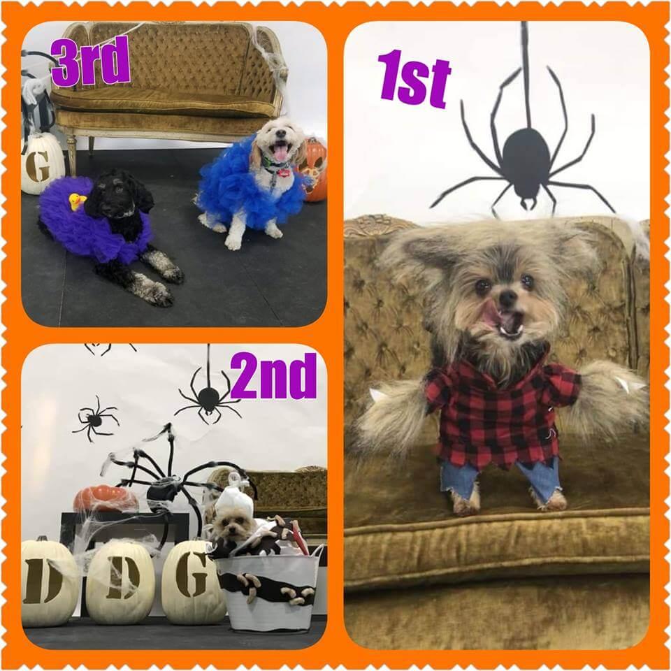 Dog Halloween Costume 2018