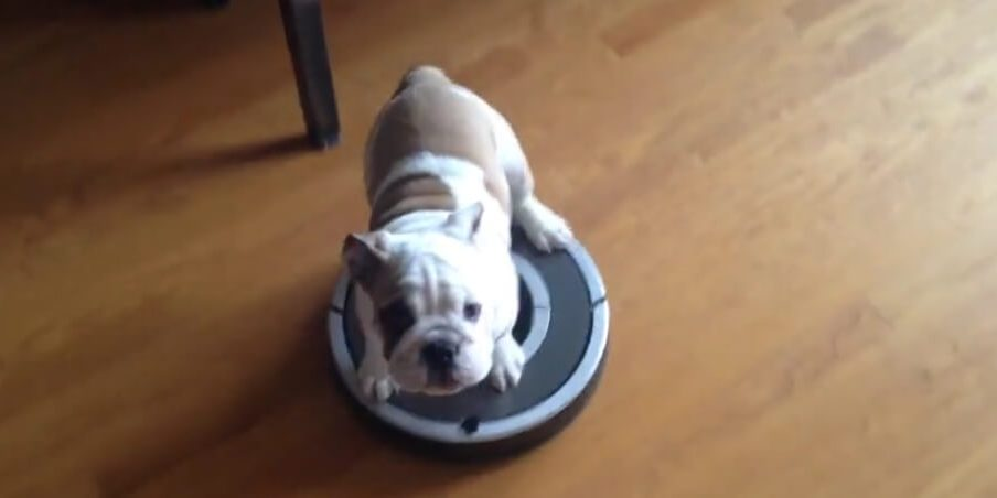 Excellent Roomba Review Of Pet Version Robot Vacuum Dog Owner Download Free Architecture Designs Scobabritishbridgeorg