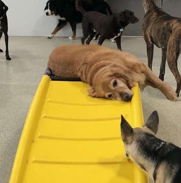 dog-daycare-sleep