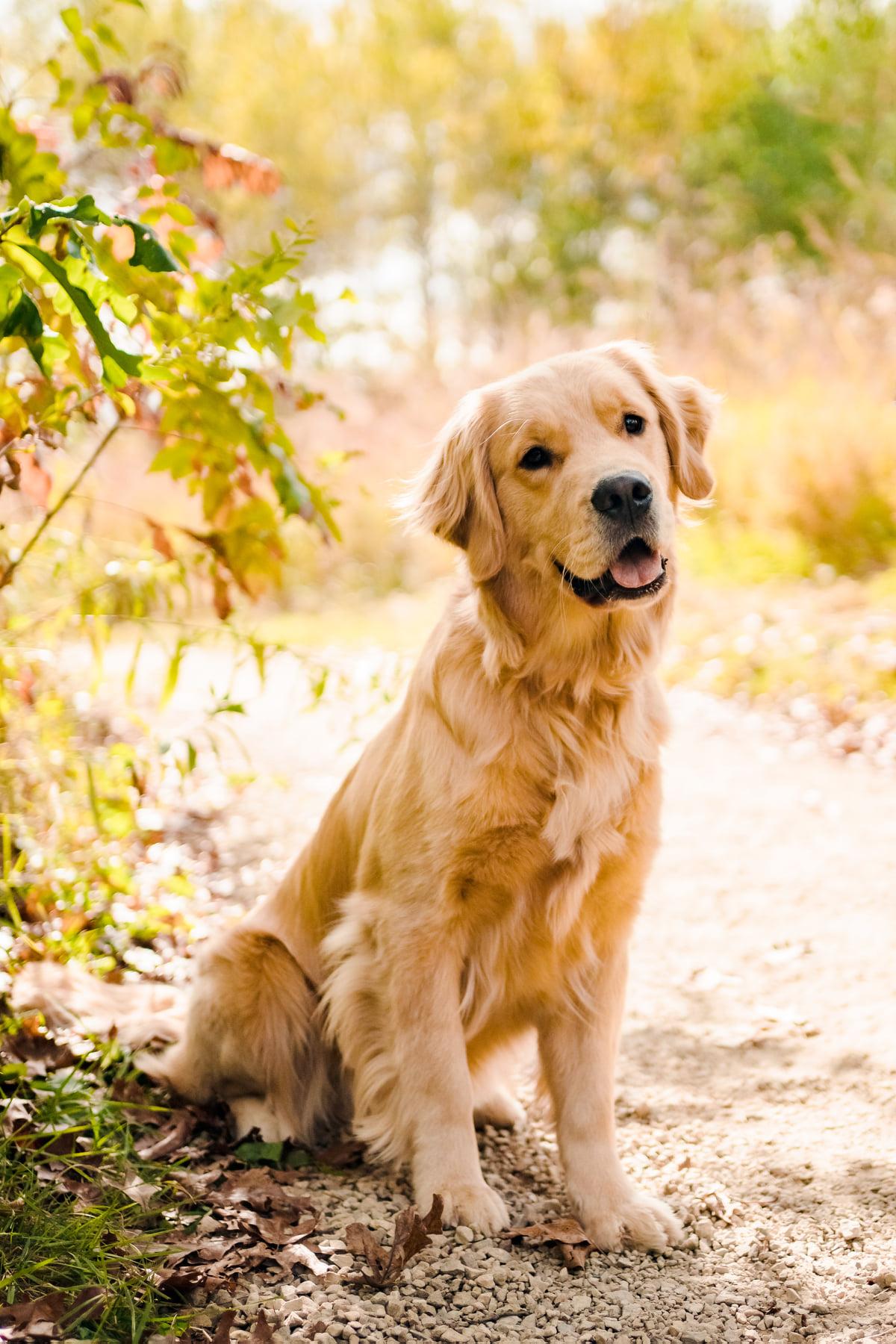 Kona DOTM in Apple Valley Dog Day Getaway